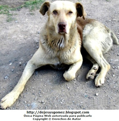 Foto de un perro con el ojo lastimado pero con mirada fija. Foto de perro tomada por Jesus Gómez