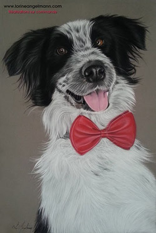 06-Border-Collie-Lorine-Angelmann-Cool-Realistic-Animal-Drawings-www-designstack-co