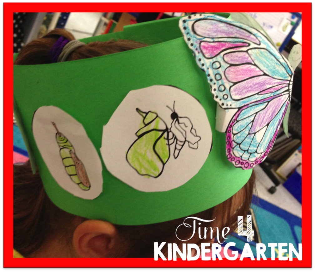 butterfly headband, life cycle of butterflies