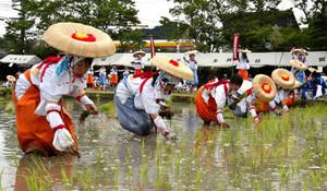 多賀大社 お田植祭