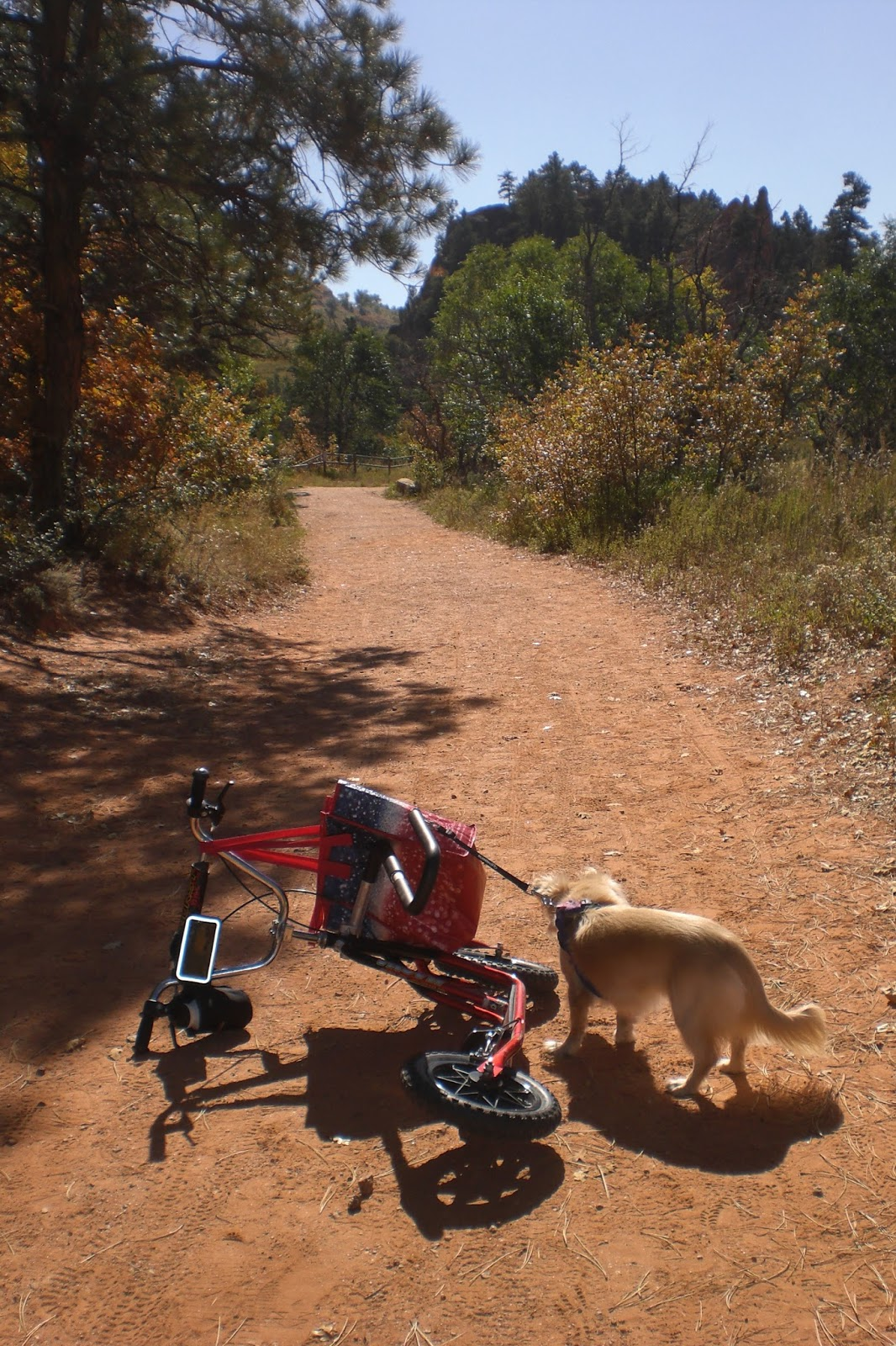 Tragedy And Triumph: Red Rocks Open Space Dog Scootering