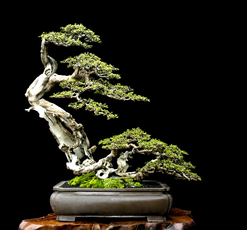 welcome to: - Bonsai Tree Art