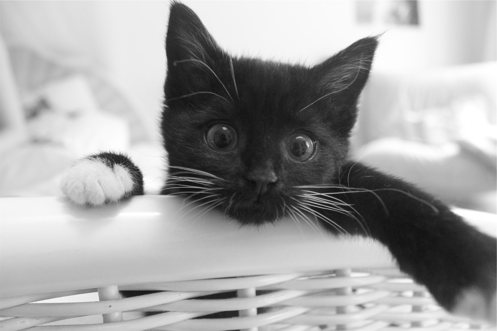 cat in a basket - dealing with anxiety - motherdistracted.co.uk