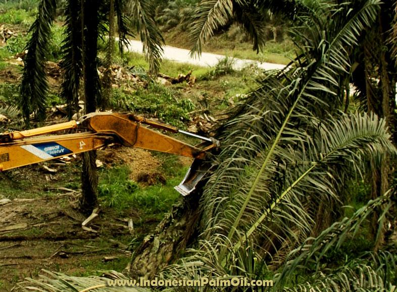 moratorium sawit pengganti ipop