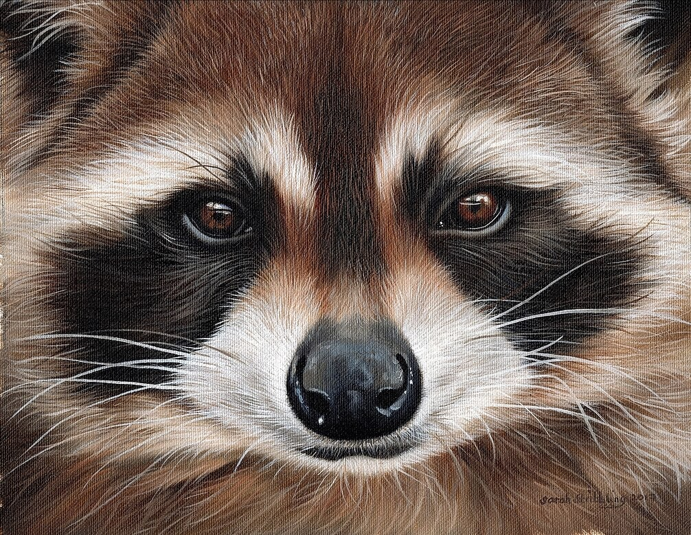 12-Raccoon-Sarah-Stribbling-A-Wildlife-and-Pet-Portrait-Artist-www-designstack-co
