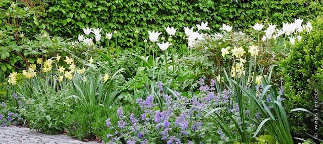 Blumenzwiebeln für den Frühling - eine Pflanzplanung oder Pflanzenliste erstellen wir Ihnen gerne, pflegeleichte Blumenbeete die ganzjährig schön sind