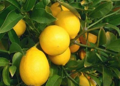 Tips Mengatasi Wajah Berminyak Dengan Lemon