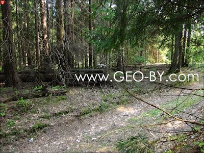 Череп козла на лесной дороге из Черемухи в Горани