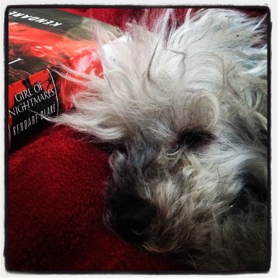 Murchie lays his fuzzy head close to Girl of Nightmares's red and black hardcover spine.