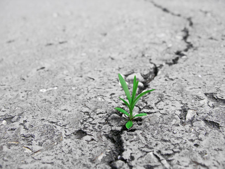 Odporność i elastyczność w zarządzaniu kryzysowym