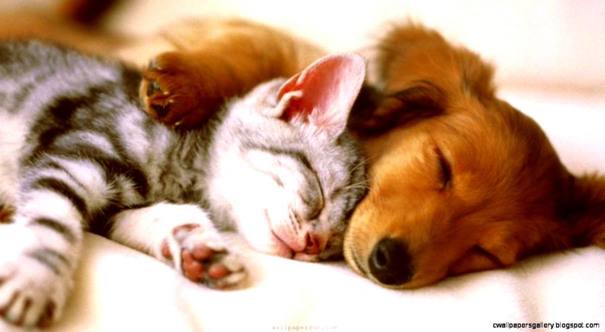 Cute Puppy And Kitten Wallpaper Wallpapers Power
