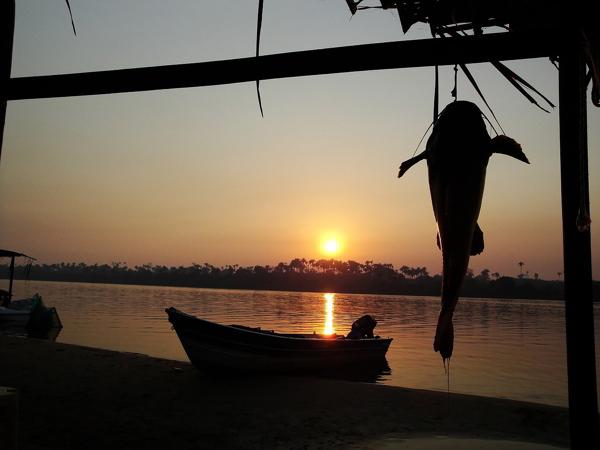Receita da Amazonia: Pirarucu de casaca