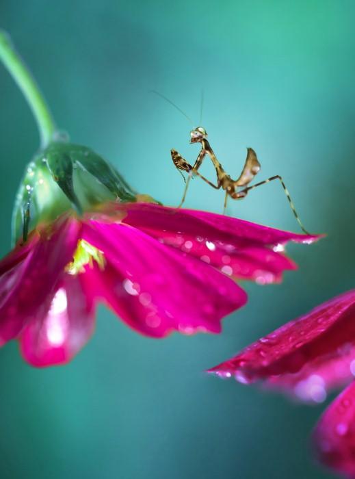 Необычные фотографии насекомых 8