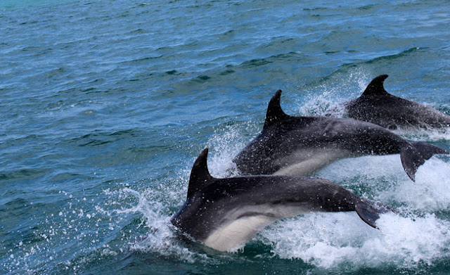 goa family dolphin watching