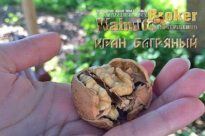 Купить саженцы орех Иван Багряный, 0957351986, 0985674877, Walnuts Broker