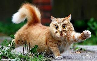 Gambar Wallpaper Kucing Lucu Banget 200022