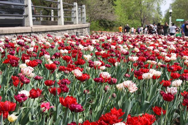 Canadian Tulip Festival, Ottawa Ontario
