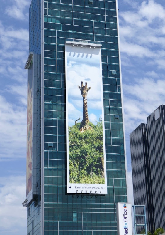 Earth Shot on iPhone Giraffe billboard