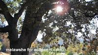 http://theearthminute.blogspot.com/2016/06/see-oaks-calabasas-fire-part-2.html