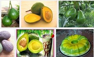 10 manfaat buah alpukat bagi kesehatan tubuh manusia