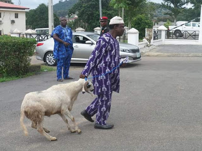 Fayose distributing rams to Ekiti people