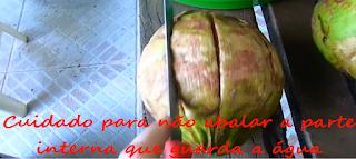 como fazer mudas de coqueiro anão