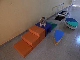 acadêmia para cães