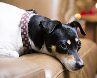 Can dog training books be trusted?