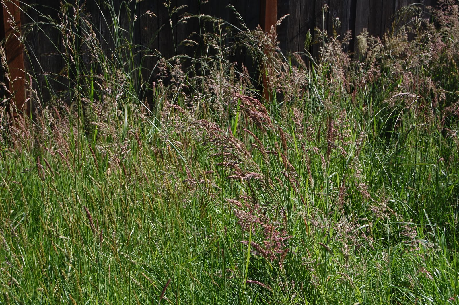 Our Creative Day Wild Grasses