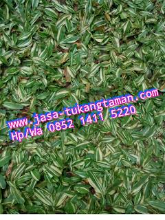 http://www.jasa-tukangtaman.com/2017/02/jasa-tukang-taman-ciawi.html
