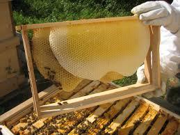 Πωλείται μελισσοκομικός εξοπλισμός