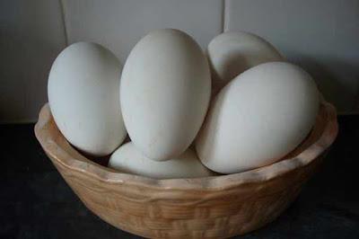 بيض الأوز