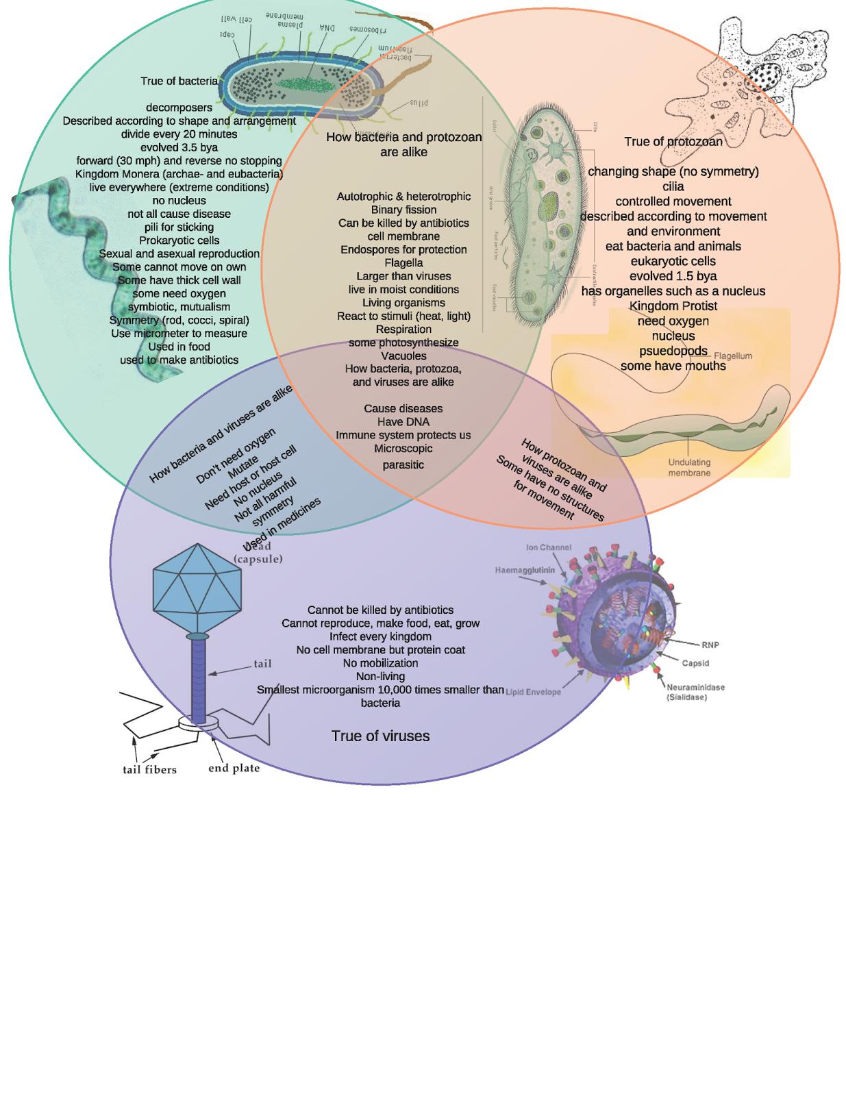 bacteria vs viruses venn diagram