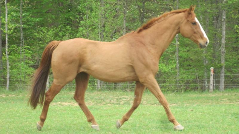 Gambar Kuda Lengkap  Gambar Foto