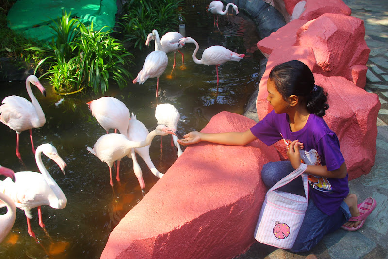 Kakak dah berani, flamingo malu alah