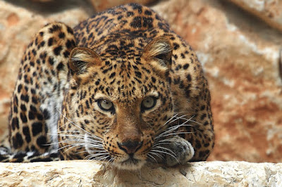 6 days queen elizabeth national park, gorilla safaris, gorilla tracking and chimpanzee trek, kazinga channel, uganda safari, uganda tours