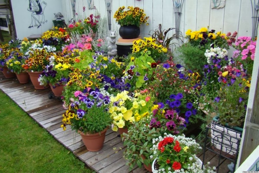 A display of well-watered container plants
