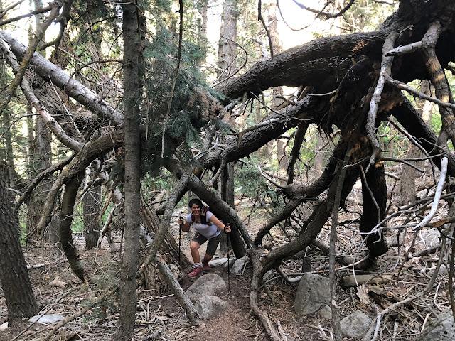 Spider Tree on Horsetail Drey Creek Canyon Alpine Trail
