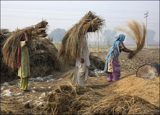 https://www.cbsencertsolution.com - Peasants and Farmers representative image