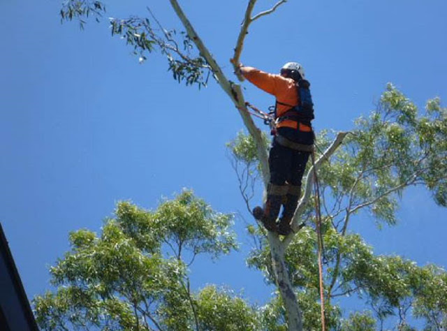 Make the Right Decision When It Comes to Tree Lopping