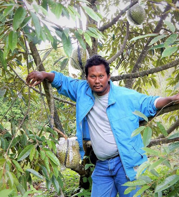 Invest Bibit Durian itu Resikonya Besar, Untungnya juga BESAR!!!