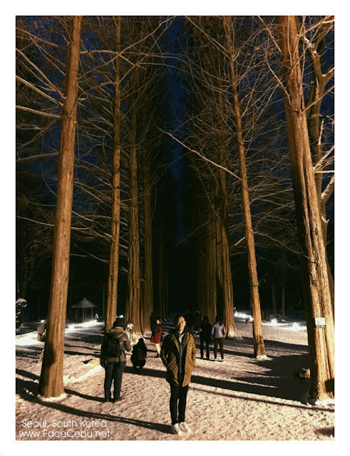 That picturesque hall of trees at night