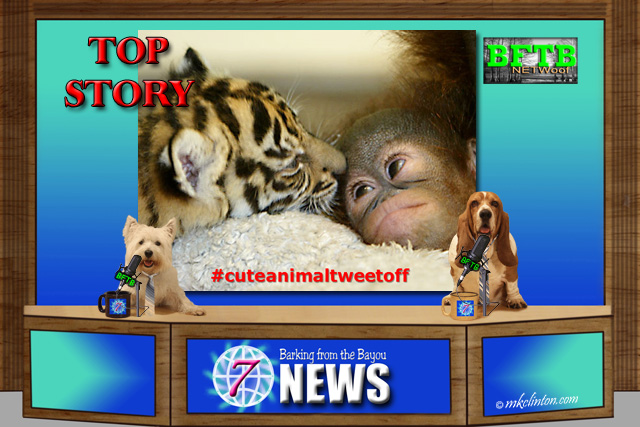 BFTB NETWoof News story on #Cuteanimaltweetoff