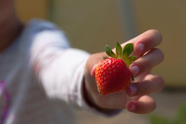 Saúde para todos | Saiba como evitar agrotóxicos economizando dinheiro