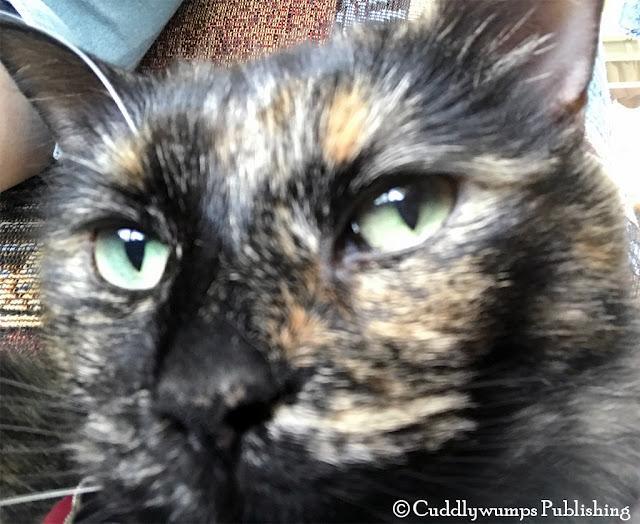 Real Cat Paisley close-up