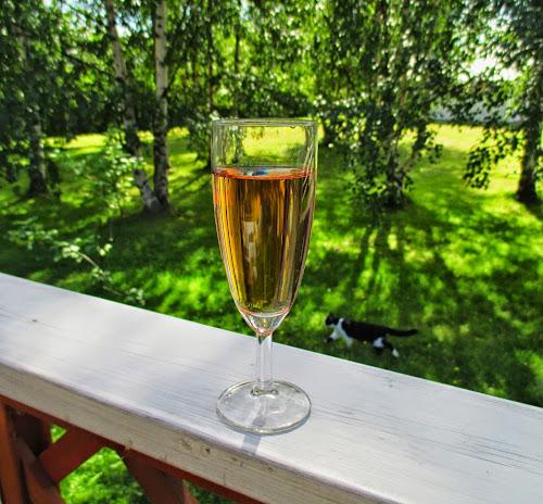shampanja, kesä, kissa, kuohuviinilasi