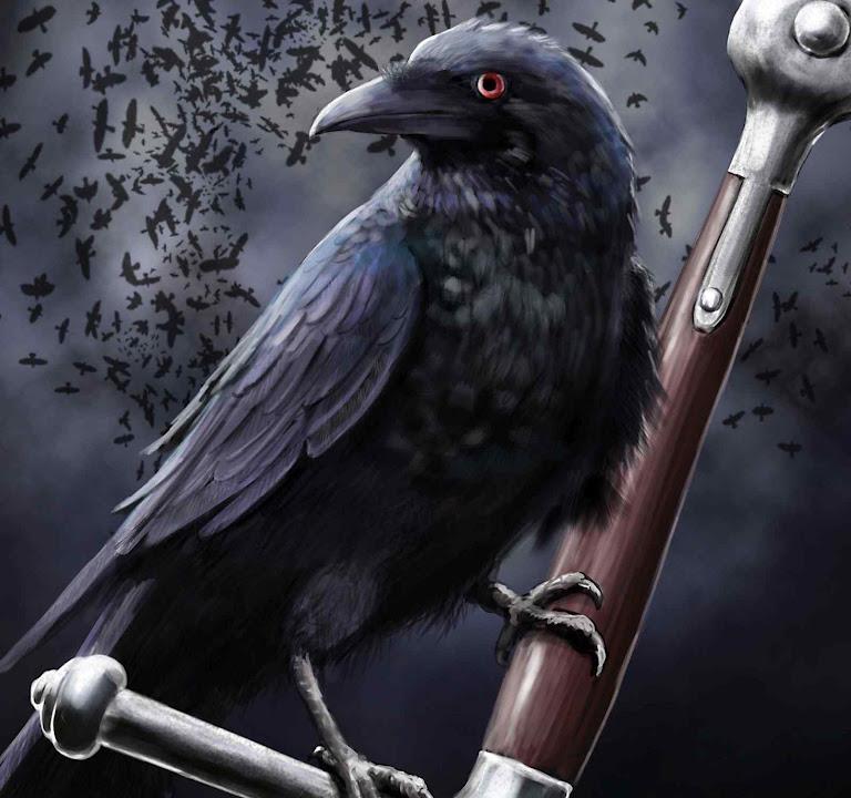 Os corvos em guerra com as corujas