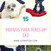 15 Motivos Para Teres Um Cão