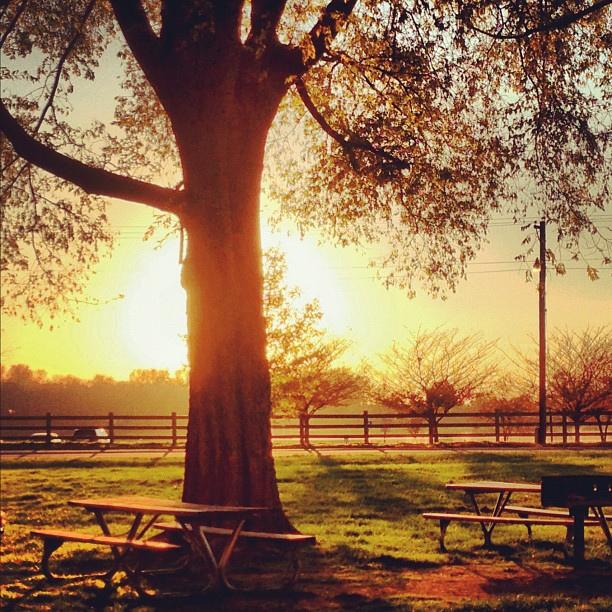 autumn picnic benches