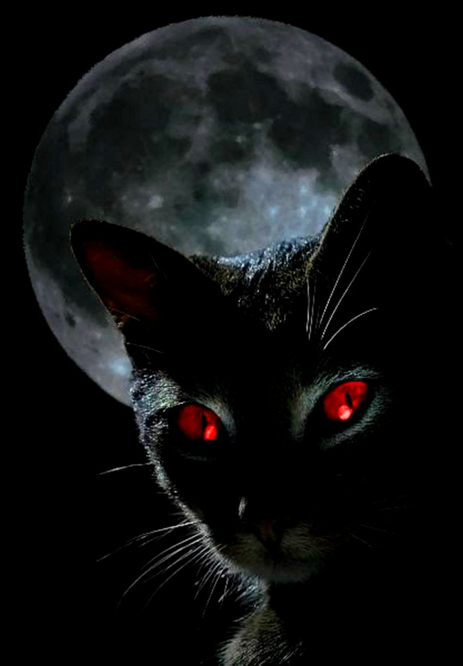 Black Cat Red Eyes Hd Wallpaper Wallpaper Background Hd